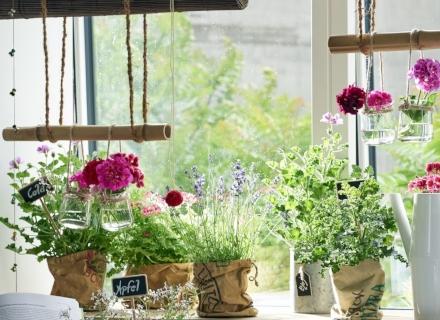 Кои стайни растения да отглеждаме според Фън шуй