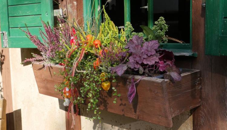 Ефектни есенно-зимни аранжировки за балкона и двора