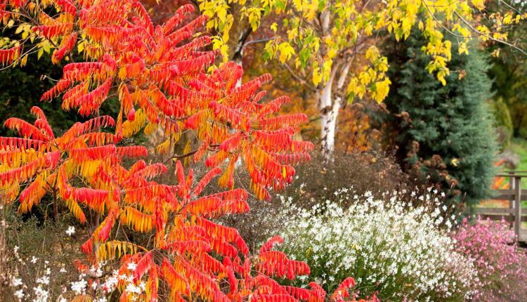 Топлите багри на есенните дървета и храсти