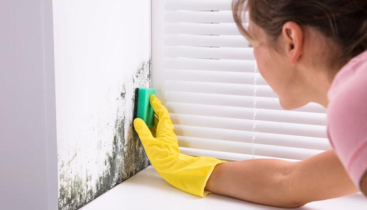 Как да премахнем мухъла от стената и да предотвратим повторна поява