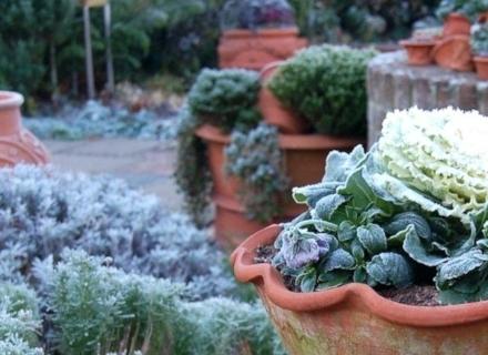 Грижи за градината в края на зимата