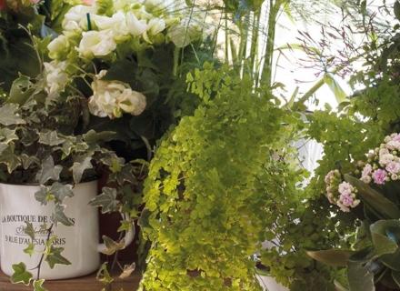 Растения, които внасят хармония и позитивна енергия вкъщи