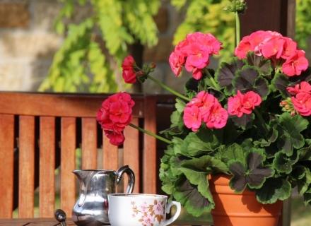 Как да торим растенията с натурални продукти от кухнята и домакинството