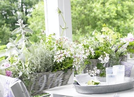 Балконски цветя, които цъфтят в бяло