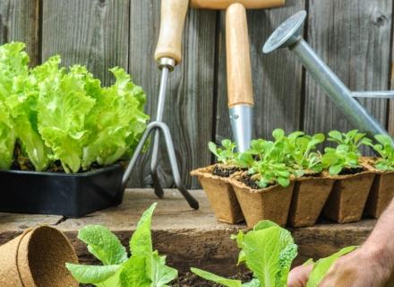 В зеленчуковата градина през февруари