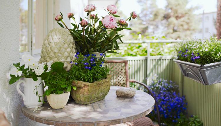 Тайните на красивите стайни цветя