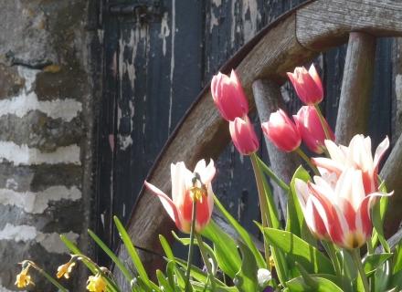 Неотложни грижи за пролетната градина