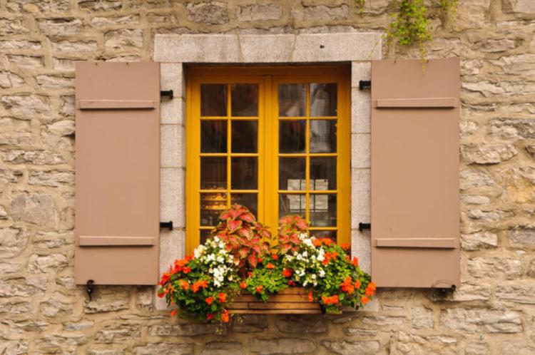 Растения, подходящи за сандъче на прозореца