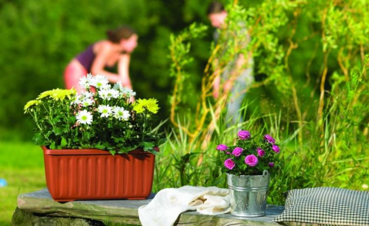 Грижи за цветята през юни