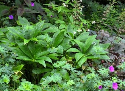 Растения, подходящи за влажни места