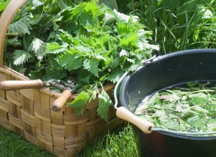 Естествен тор от коприва подхранва и защитава растенията