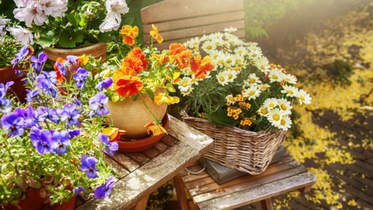 Домашен тор за цветята с продукти от кухнята - рецепта