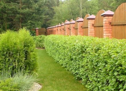 Какви растения да засадим край оградата
