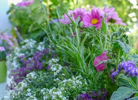 Подхранване на растенията с мая