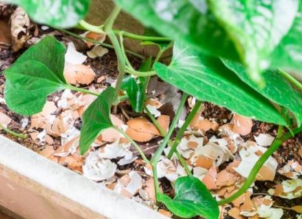 Яйчените черупки - за подхранване на почвата и против вредители
