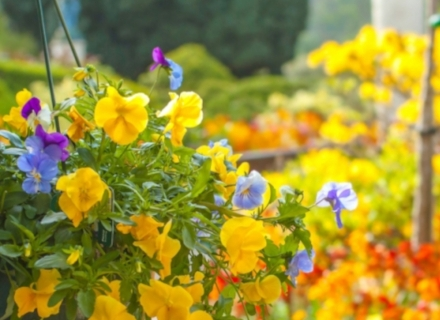 Да вкореним цветя за следващото лято