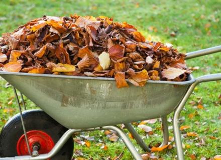 Как да се сдобием с органичен тор от есенни листа?