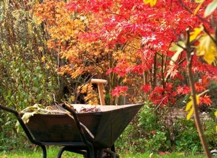 Листопадни дървета и храсти, които красят есенния двор