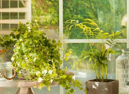 7 необичайни, но много ефектни стайни растения