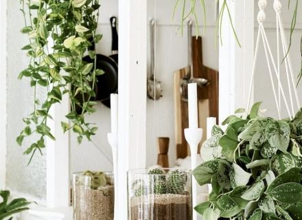 Катерливи и висящи стайни растения