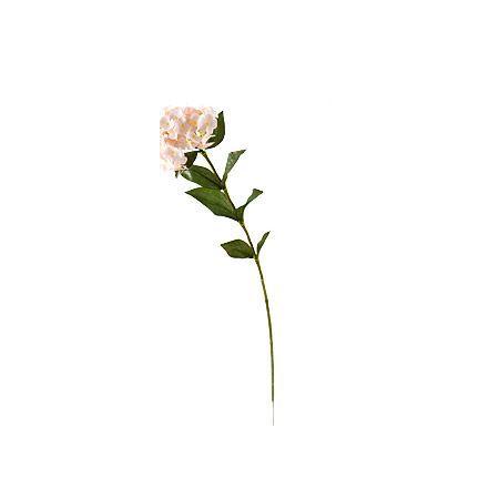 Незабравка розова