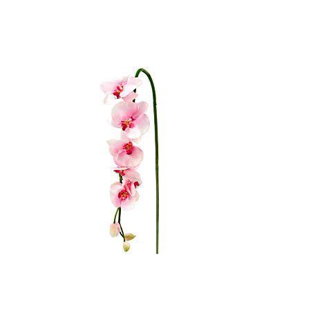 Орхидея розова