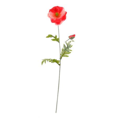 Мак розов