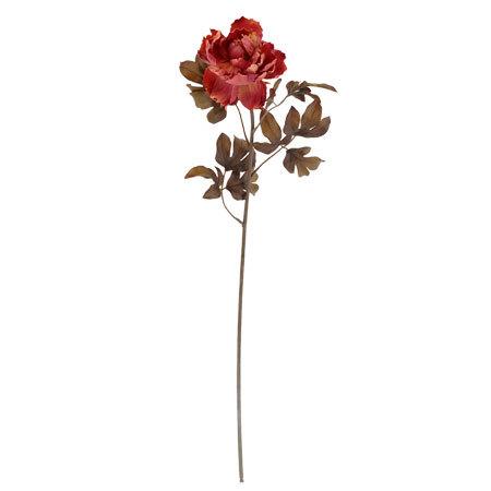 Божур розов
