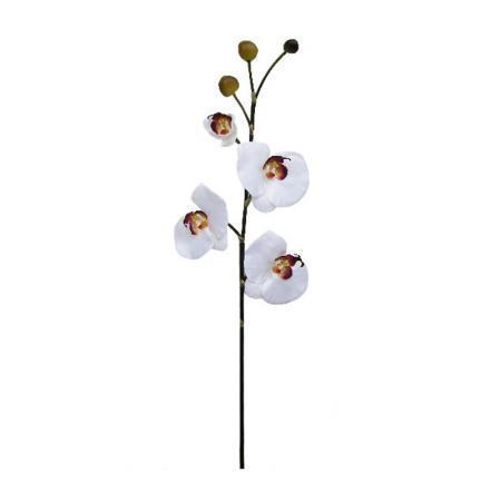 Орхидея бяла