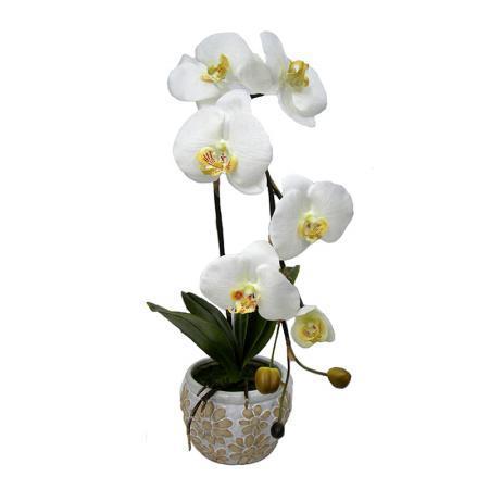 Орхидея бяла в саксия