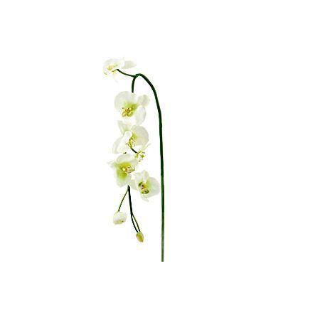 Орхидея зелена