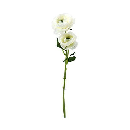 Камелия бяла 50см.